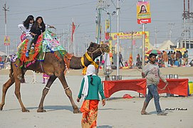 2019 Jan 16 - Kumbh Mela - Camel Ride in the Holiest of Sectors.jpg