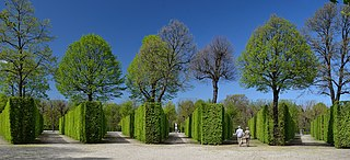 formal plantation of trees, in a formal garden