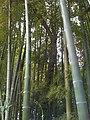 4 Chome Jindaiji Minamimachi, Chōfu-shi, Tōkyō-to 182-0013, Japan - panoramio (3).jpg