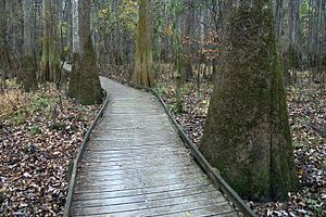 Congaree National Park - Image: A548, Congaree National Park, South Carolina, USA, 2012