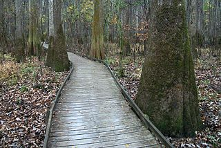 Congaree National Park national park located in South Carolina
