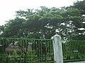 A Very Green Environment, in SMAN 1 Karangan - panoramio (1).jpg