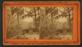 A View of the Oklawaha River, Florida, near Sandy Bluff., from Robert N. Dennis collection of stereoscopic views.png