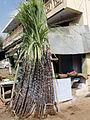 A aesthetic sugarcane sales.JPG
