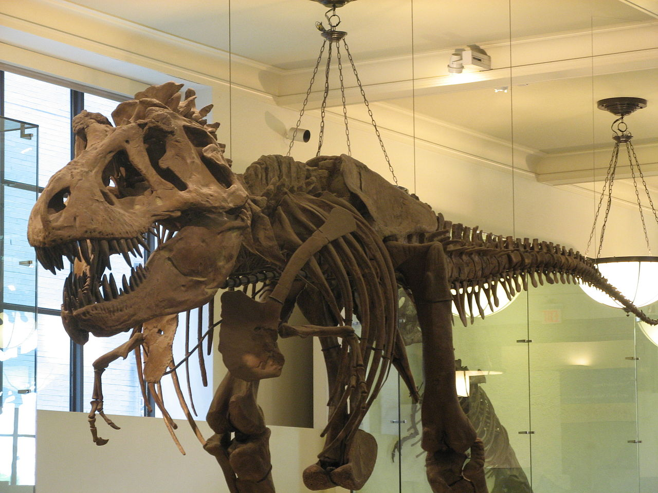 File:A dinosaur in the natural history museum, NYC 2.jpg ...