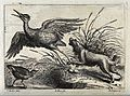 A dog chasing a heron off its nest in the reeds. Engraving b Wellcome V0022134.jpg