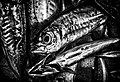 A fish in market in market in Black and White.jpg