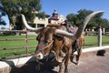 """A longhorn cow, awaiting a """"roundup"""" (for tourists' benefit) in the Stockyards, historic livestock-market district in Fort Worth, Texas LCCN2013650793.tif"""
