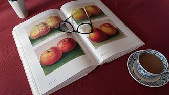 Korbinian Aigner - Image: A reader enjoying a catalog of the works of Korbinian Aigner