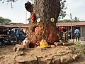 A scene of tree worship in Hokenakal.JPG
