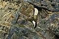 A small rock arch near Pwll March, Newgale - geograph.org.uk - 1525028.jpg