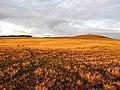 A stubble field near Clovenfords - geograph.org.uk - 630866.jpg