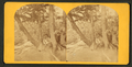 A view of a young woman sitting among some trees, by Dupee & Co..png