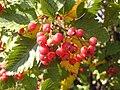 Ab plant 2242.jpg
