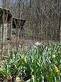 Abandoned-Cabin-2-Elkmont.jpg