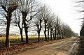 Abdij van Herkenrode, geleide lindedreef - 375747 - onroerenderfgoed.jpg