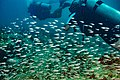 Abrolhos Marine National ParkRobertoCostaPinto29.jpg