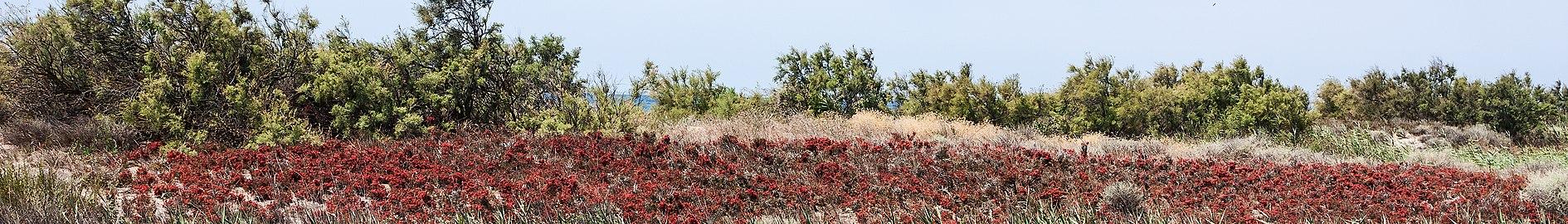 Absheron National Park.jpg