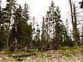 Acadia National Park (8111153468).jpg