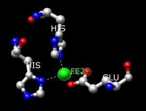 Homogentisate 1,2-dioxygenase - Image: Active site 2