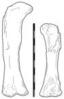 Aegyptosaurus.png