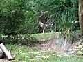 African Wild Dog (3564854123).jpg