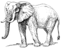 African elephant (PSF).png