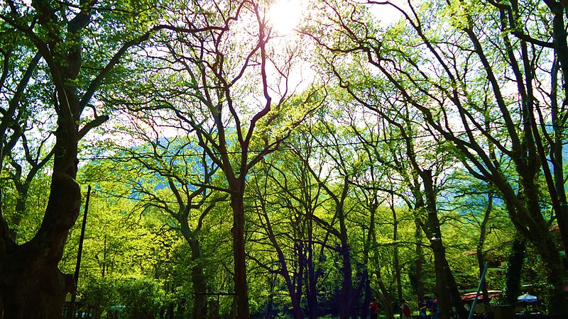 Αρχείο:Agios Nikolaos Park, Naousa, Macedonia.jpg