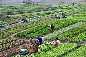 Agriculture in Vietnam - Agriculture in Vietnam with farmers