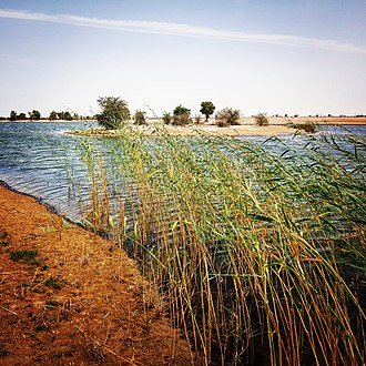 Al Marmoom Desert Conservation Reserve - Al Qudra Lakes at Al Marmoom Desert Conservation Reserve.