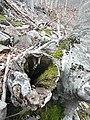 Al voltant de coll Sabènia P1230599.JPG