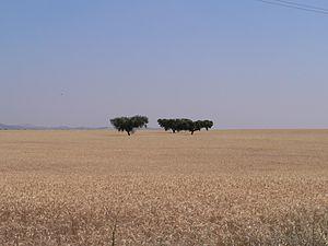 Baixo Alentejo (intermunicipal community) - Fields of wheat in Baixo Alentejo