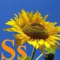 Alfabet roślin - literka S.jpg
