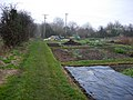 Allotments near Brinkley - geograph.org.uk - 1112694.jpg
