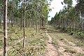 Alto Araguaia - State of Mato Grosso, Brazil - panoramio (1202).jpg