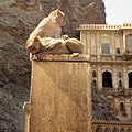 Amber Fort monkeys (6650784095).jpg