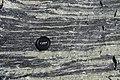 Amphibolite in Geopark on Albertov (1).JPG