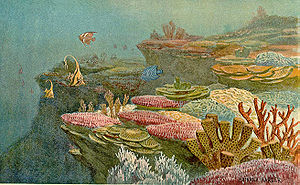 image of Ancient coral reefs