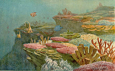 Ancient coral reefs Ancient coral reefs.jpg
