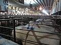Animal Cruelty Iowa Select Farms IS 2011-05-28 33 (5841330730).jpg