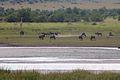 Animals at Pilanesberg National Park 1.jpg