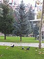 Ankara, Dikmen Valley 23 nov 2012 - panoramio (1).jpg