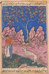 Page from Tales of a Parrot (Tuti-nama): Thirtieth night: The woman conversing with her children, as the leopard returns, egged on by a fox who is tied to his leg