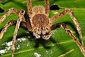 Arachnidae (15516527238).jpg