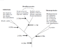 Archea phylogeny CSI.png
