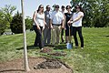 Arlington National Cemetery horticulture department conducts a tree planting ceremony in Section 34 (34193423371).jpg