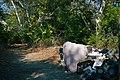 Arroyo Seco Homeless Encampment 01.jpg