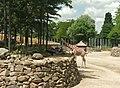 Artis, Zoo, Dierentuin - panoramio (73).jpg