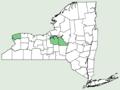 Asplenium scolopendrium var americanum NY-dist-map.png