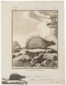 Atherurus fasciculatus - 1700-1880 - Print - Iconographia Zoologica - Special Collections University of Amsterdam - UBA01 IZ20600021.tif